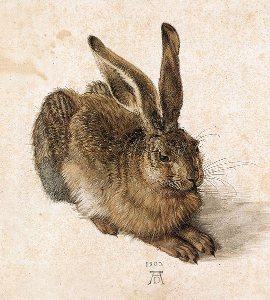 Albrecht Durer, Young Hare, c. 1505, gouache and watercolor on paper.
